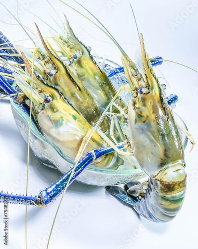 Big fresh river prawn on balance scales - Buy this stock
