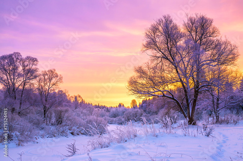 Foto op Aluminium Purper winter landscape with sunset and the forest