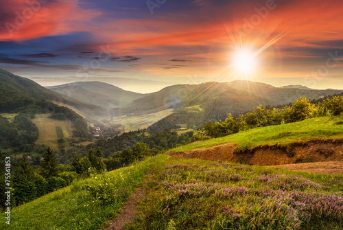 Cadres-photo bureau Campagne flowers on hillside meadow with forest at sunset