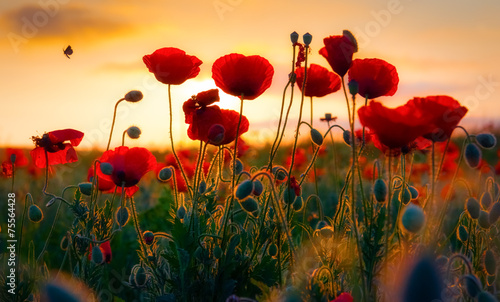 Fotobehang Poppy Poppies