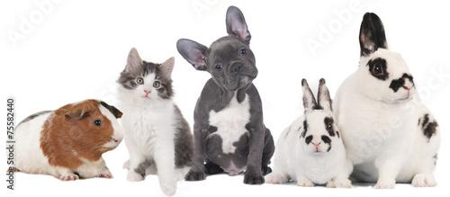 Keuken foto achterwand Kat Haustiergruppe