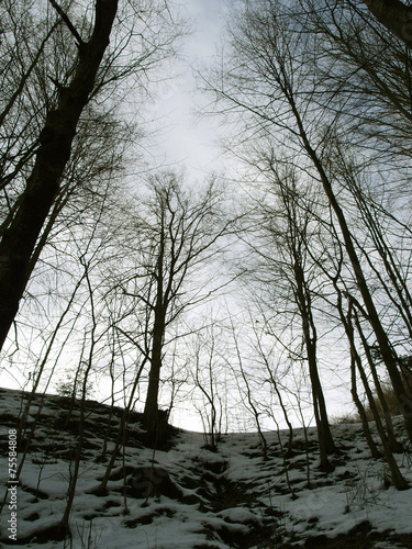 dark winter forest in the evening buy this stock photo and explore
