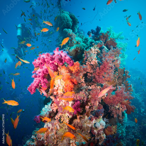 A scuba diver swimming underwater with fishes