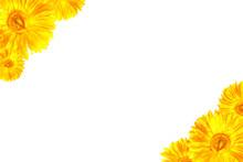 Yellow Gerbera Framework