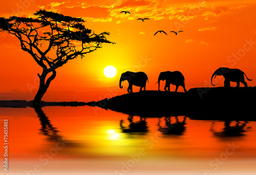 Stickers pour portes Orange eclat elefantes por la montaña