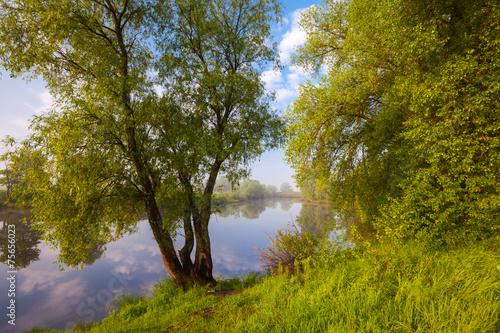 Foto op Plexiglas Landschappen sunset in spring forest