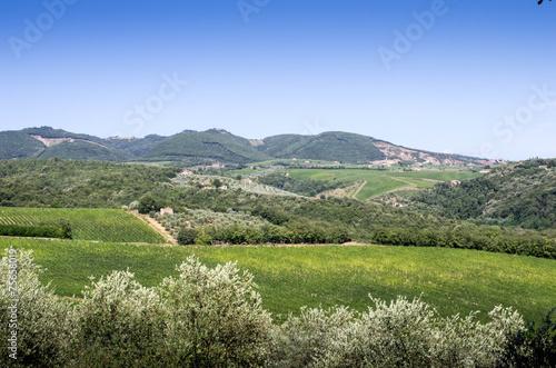 Foto  vignes chianti