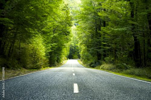 Fotografija Summer Country Road Trees Beside Concept