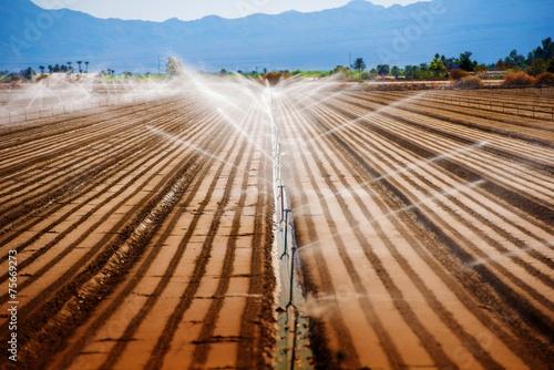 Fotografie, Obraz  California Agriculture