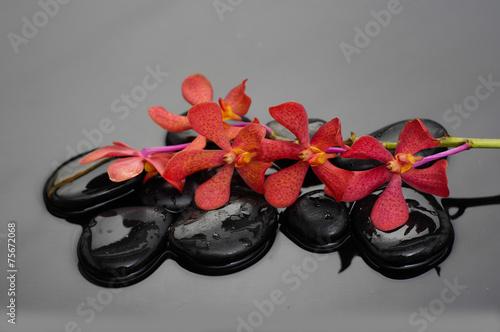 martwa-natura-z-czarnymi-kamykami-i-czerwona-galezia-orchidei