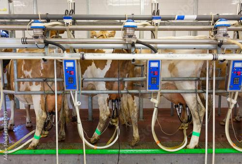 Fotografie, Obraz  Cow milking facility in a modern farm
