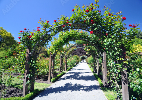 Wellington Rose Garden New Zealand