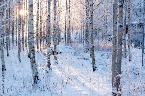 Snowy birch forest and sun light Wallpaper Mural