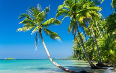 Obraz na SzkleCoconut Coast Green Getaway
