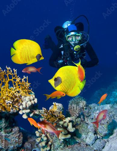 fototapeta na drzwi i meble Kobieta nurek zwiedzania ogrodu koralowego
