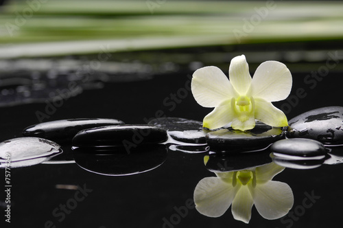 Poster Spa orchid with petals and therapy stones-green plant background