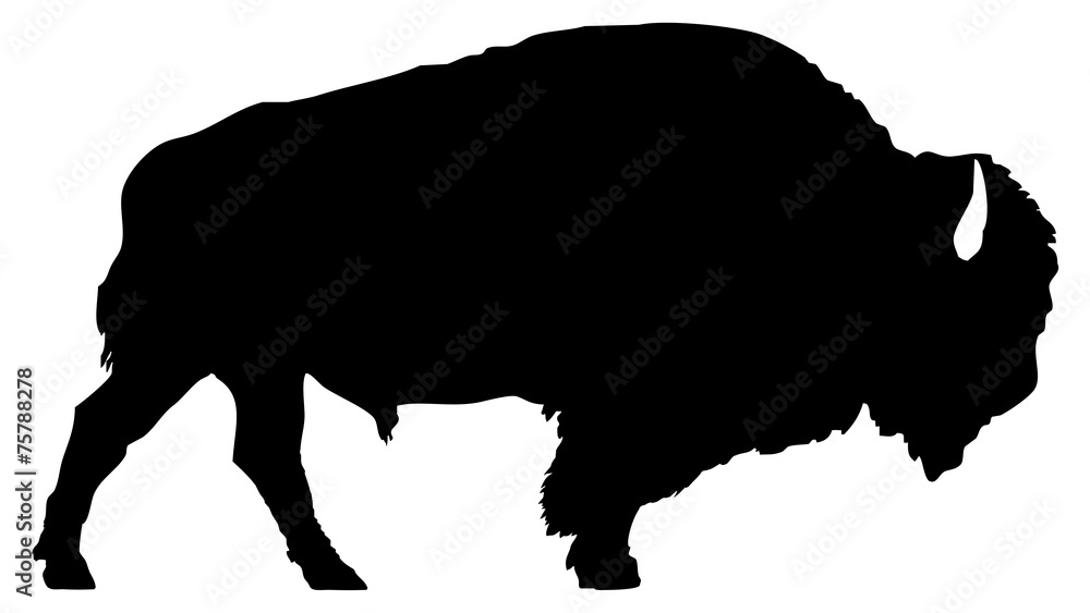 Fototapeta American bison silhouette isolated on white background.