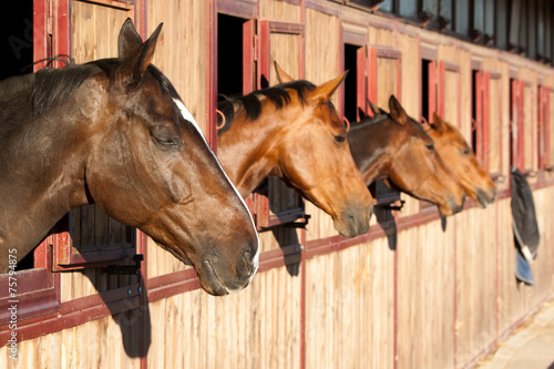 Photo  Horses in their stable