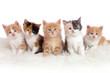 canvas print picture - Kitten/Kätzchen