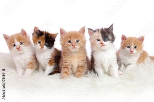 Kitten/Kätzchen Canvas Print