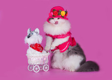 Cat In A Pink Dress And Hat Wi...
