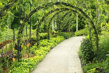 Fototapeta Botanical garden
