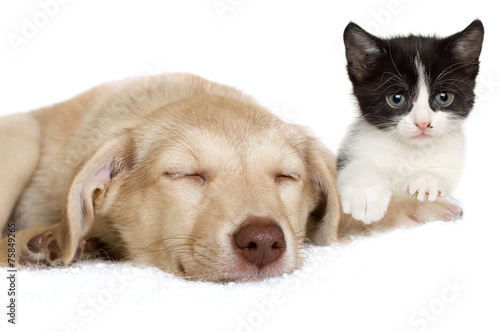 Fototapety, obrazy: puppy and kitten lying