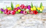 Fototapeta Tulipany - spring flower