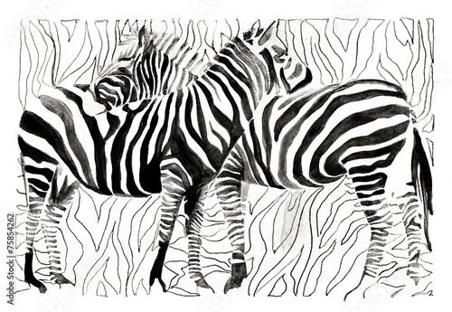 ilustracyjne-zebry-na-bialym-tle
