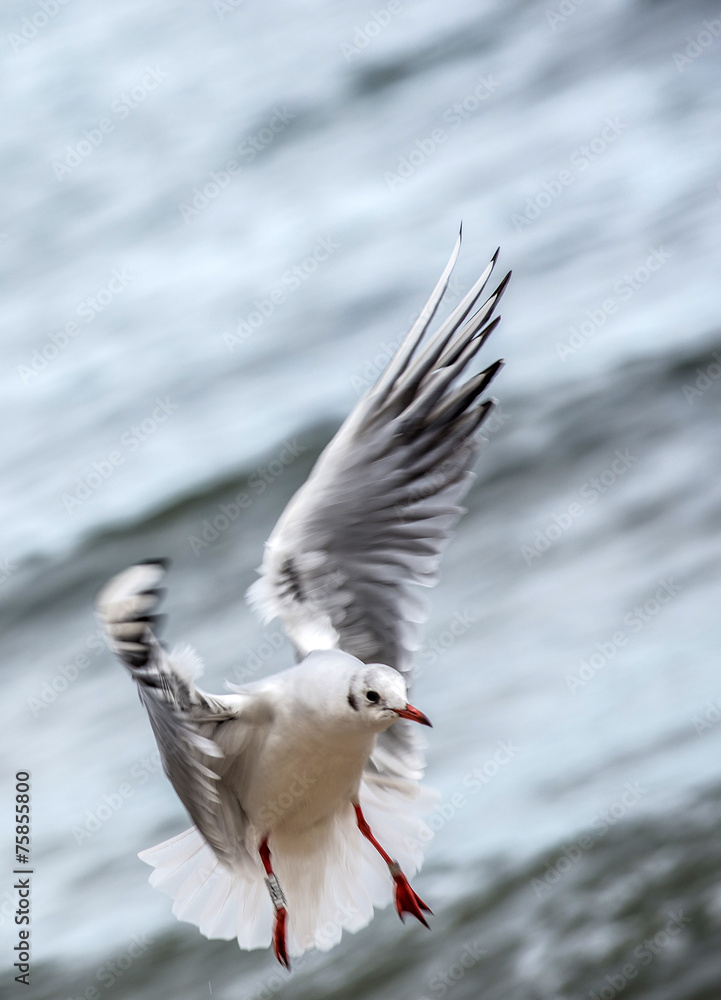 Seagull in Orlowo district in Gdynia, Poland