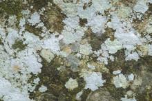 Lichen On Stone Background
