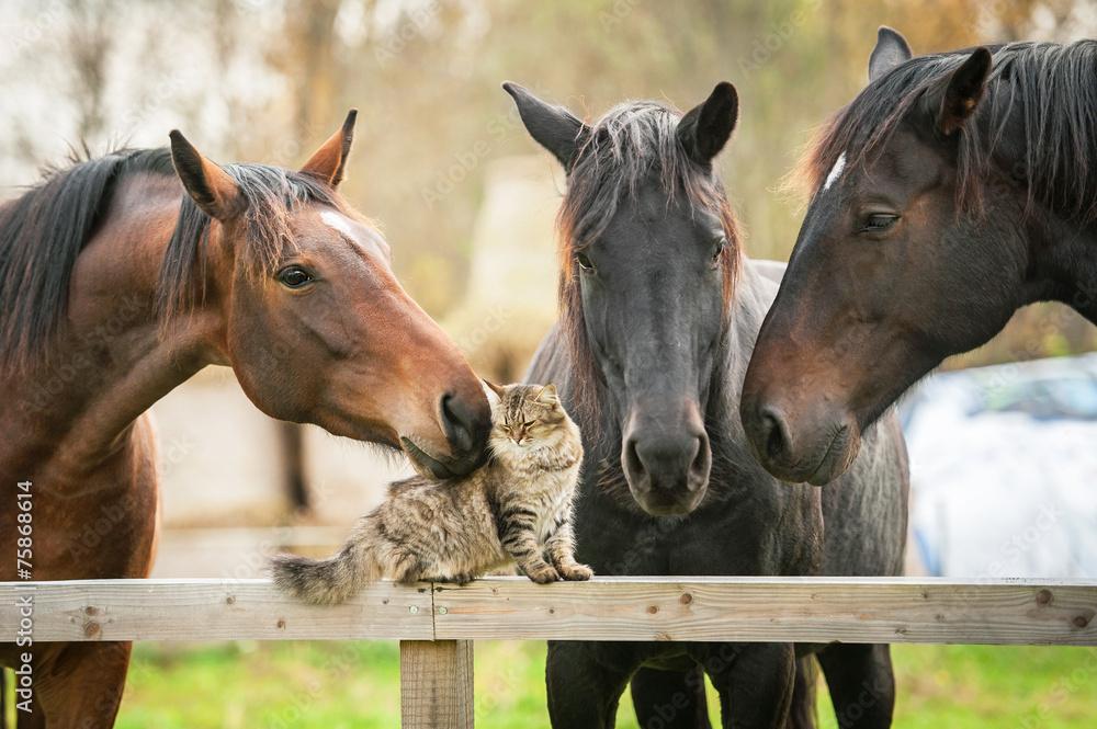 Fototapeta Three horses and cat
