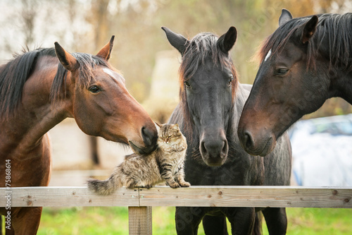 Photo  Three horses and cat