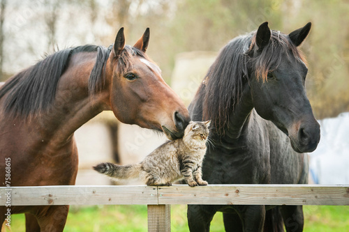 Photo  Friendship of cat and horses