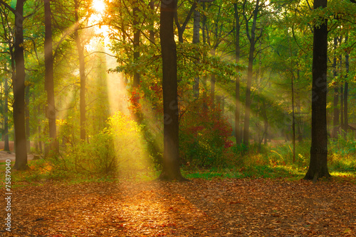 Poster Miel beautiful autumn forest lit by sunlight