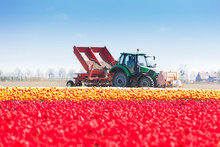 Pink Tulip Field And Tractor W...