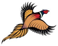 Illustration Of A Stylish Multi-colored Flying Pheasant