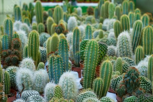 Foto auf AluDibond Kakteen cacti different varieties