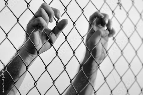 Fotografia, Obraz  steel cage