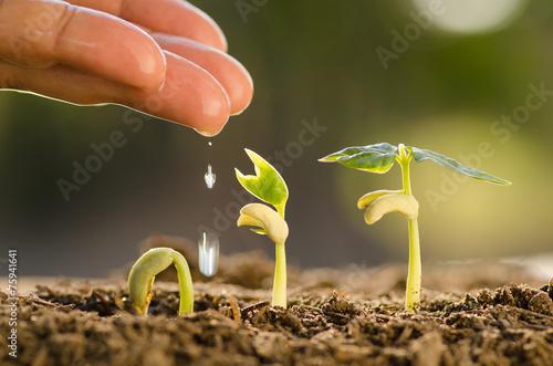 Fotobehang Planten Male hand watering young plant