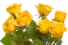 Seven Yellow Roses On White