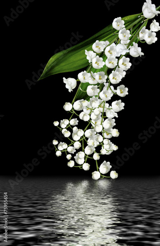Poster Muguet de mai The branch of lilies of the valley flowers isolated on black bac