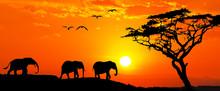 Familia De Elefantes Por La Montaña