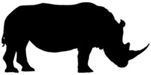 Silhouette Rhino Isolated On W...