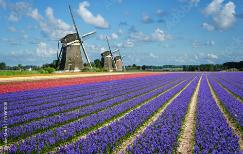 Flowers and windmills in Holland Fotobehang