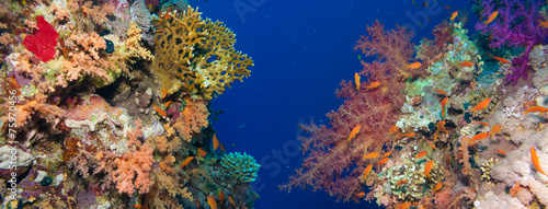 Spoed Foto op Canvas Onder water Colorful underwater reef with coral and sponges