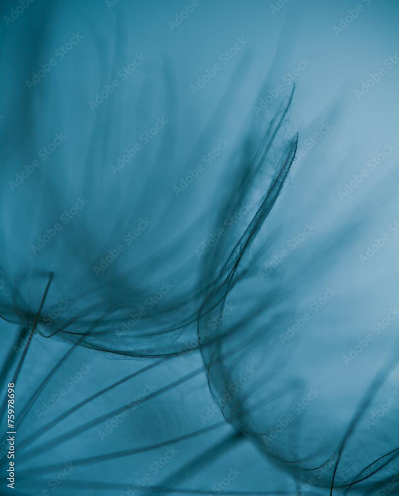 Abstrakcjonistyczny dandelion kwiatu tło, Duży dandelion <span>plik: #75978698 | autor: R_Szatkowski</span>
