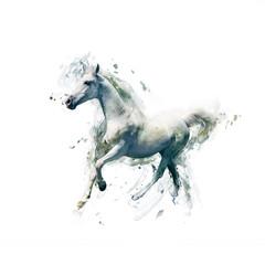 fototapeta biały koń na białym tle