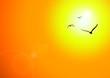 Leinwandbild Motiv Sonnenuntergang Vögel