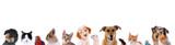 Fototapeta Animals - Unterschiedliche Haustiere – Köpfe in einer Reihe